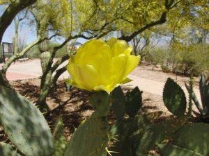 spring-2011-005
